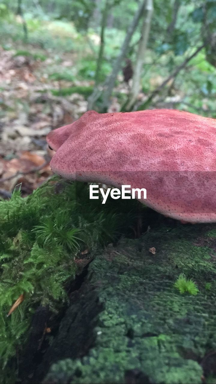 mushroom, fungus, toadstool, nature, growth, outdoors, close-up, forest, day, fly agaric, no people, tree trunk, beauty in nature, grass, tree, fragility, fly agaric mushroom