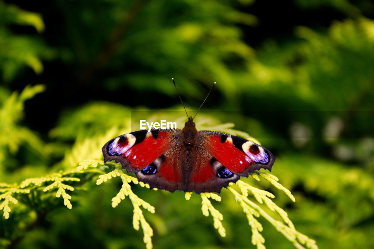 insect, invertebrate, animal wildlife, animal themes, animal, animals in the wild, one animal, plant, close-up, beauty in nature, animal wing, focus on foreground, nature, no people, butterfly - insect, selective focus, day, animal body part, green color, flower, outdoors, butterfly, pollination