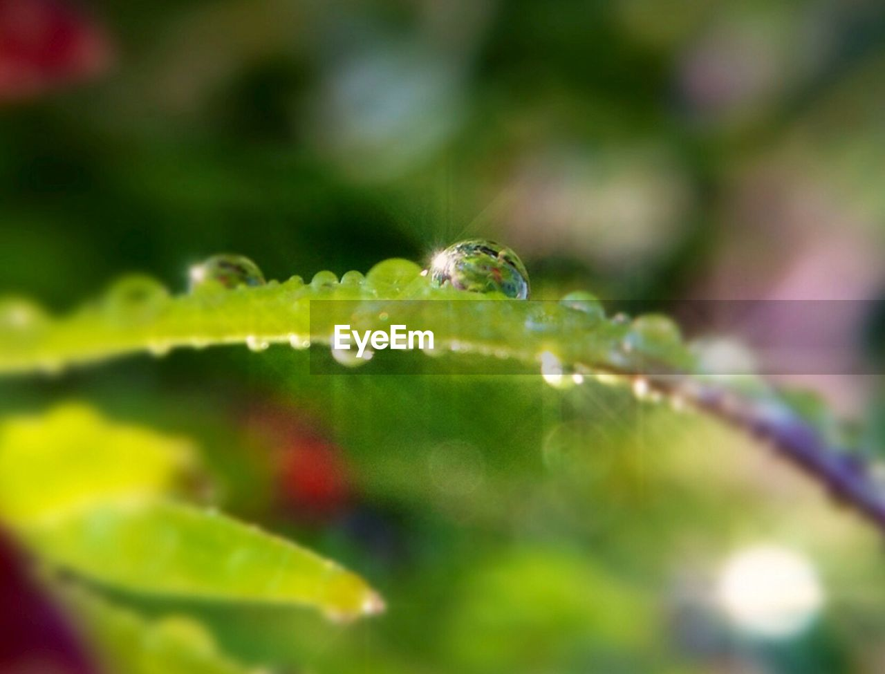Close-up of water drops on leaf against blurred background