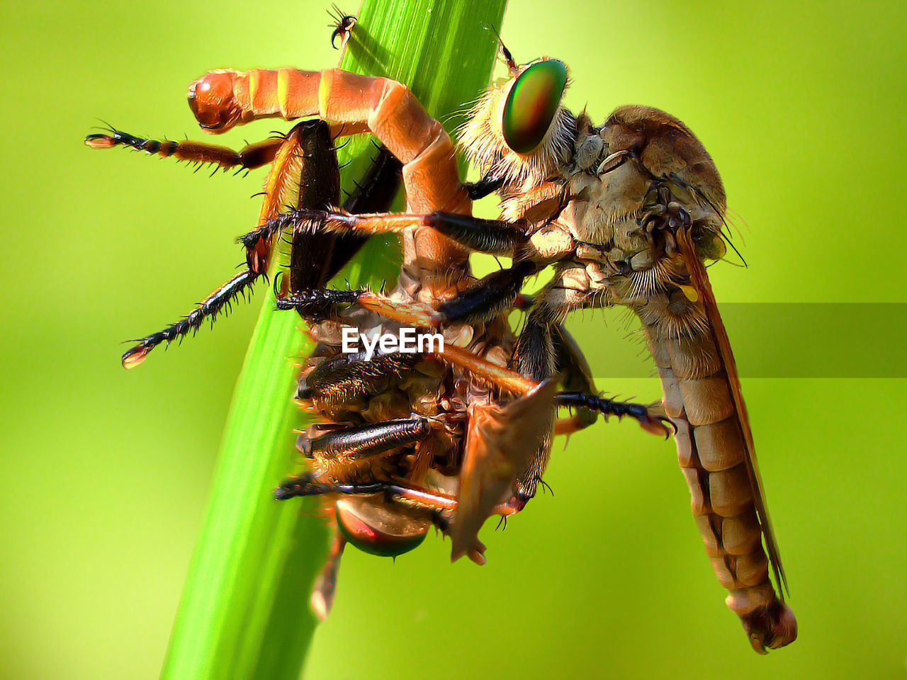 insect, animal themes, animals in the wild, close-up, no people, green color, one animal, animal wildlife, nature, day, outdoors