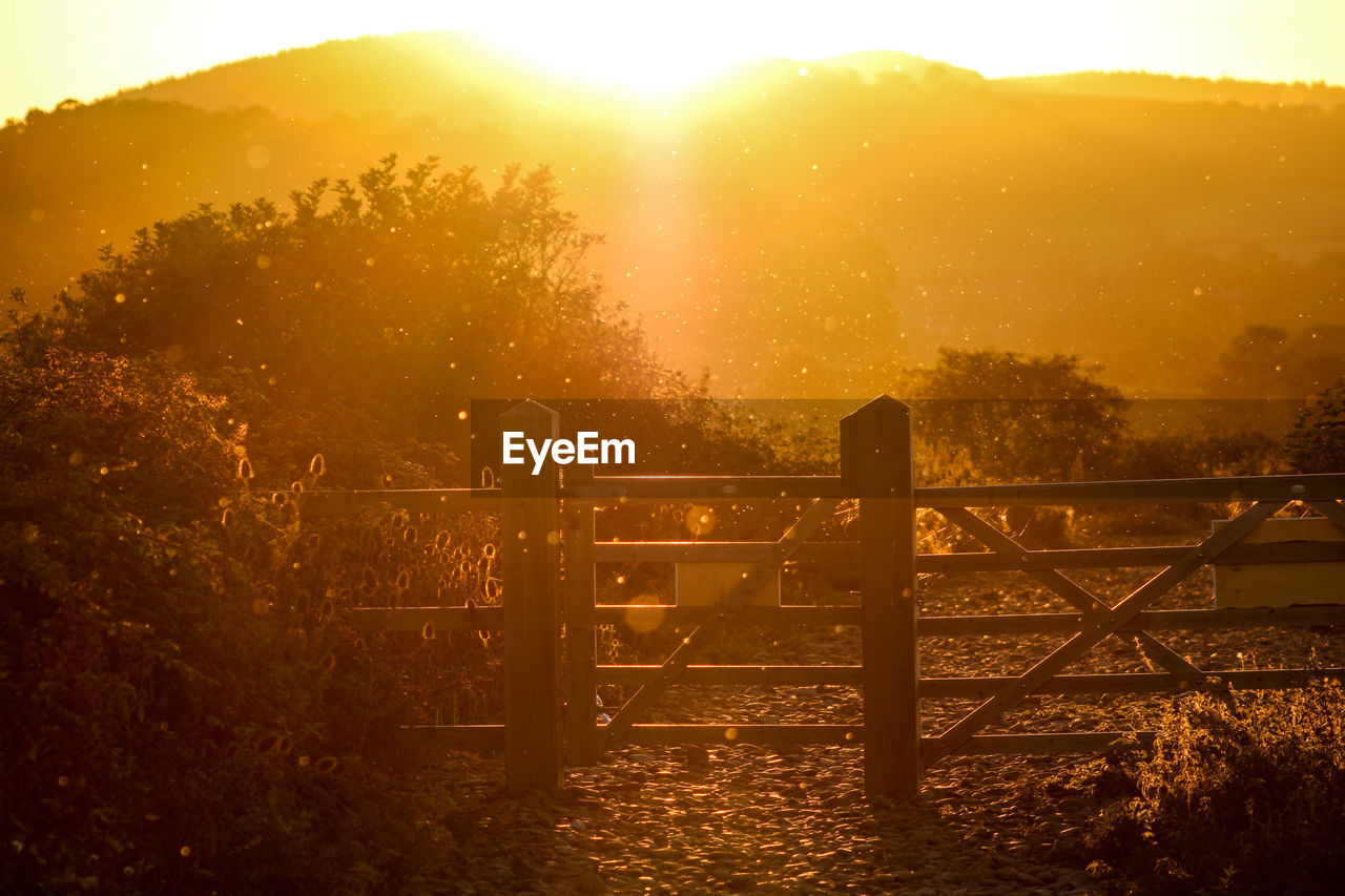 tree, sunset, sunlight, nature, sun, plant, fence, barrier, boundary, beauty in nature, sky, orange color, no people, tranquil scene, tranquility, land, lens flare, outdoors, non-urban scene