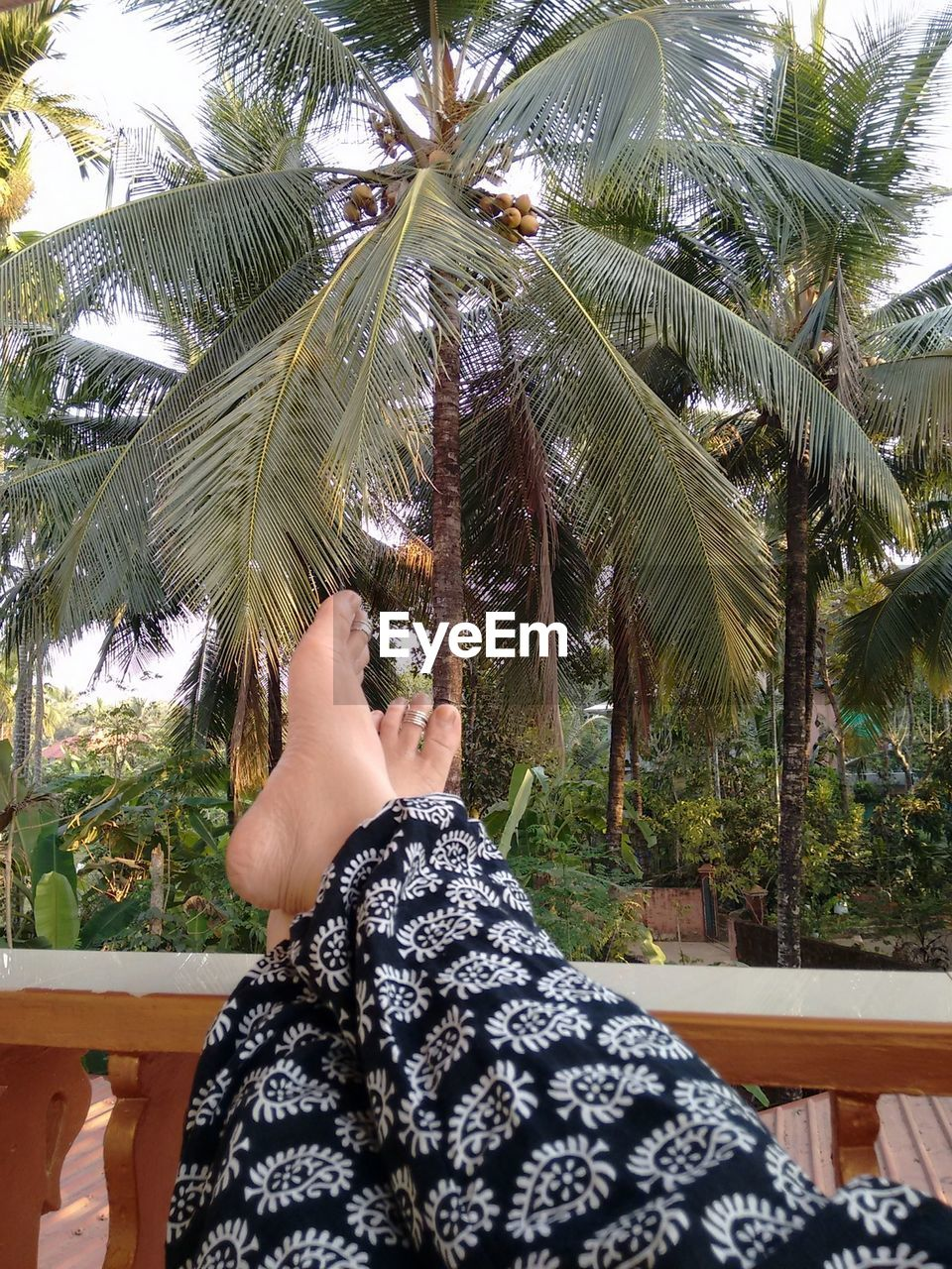 Low section of person legs on balcony railing against coconut palm trees