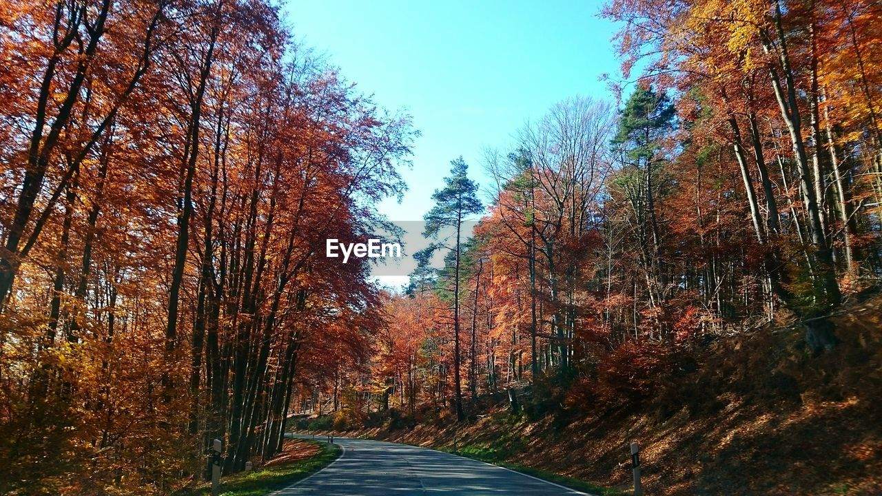 autumn, tree, change, leaf, nature, the way forward, forest, beauty in nature, tranquil scene, tranquility, scenics, road, day, no people, outdoors, branch, sky