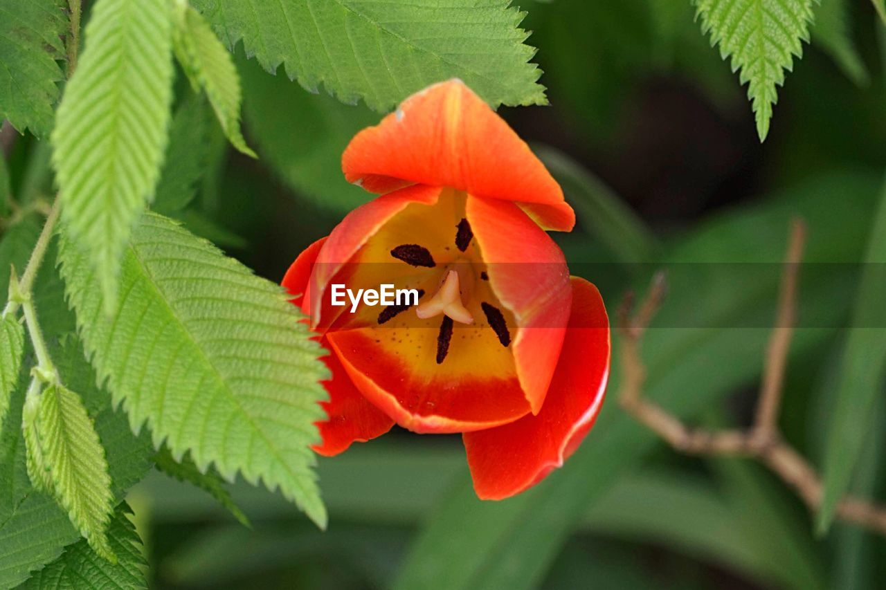 leaf, plant part, plant, growth, close-up, focus on foreground, freshness, beauty in nature, petal, flowering plant, orange color, green color, flower, flower head, fragility, inflorescence, vulnerability, nature, no people, day, outdoors