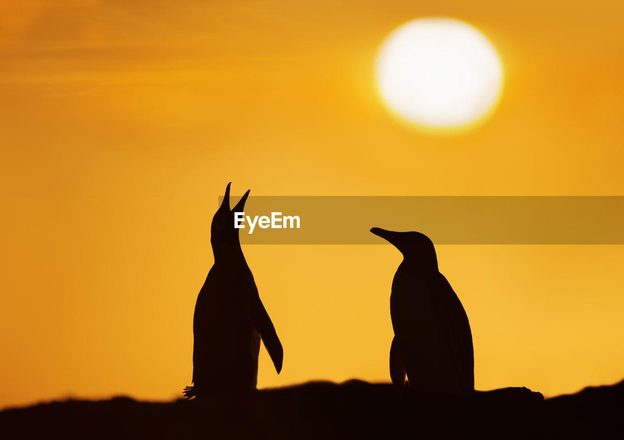 Silhouette penguins against orange sky during sunset