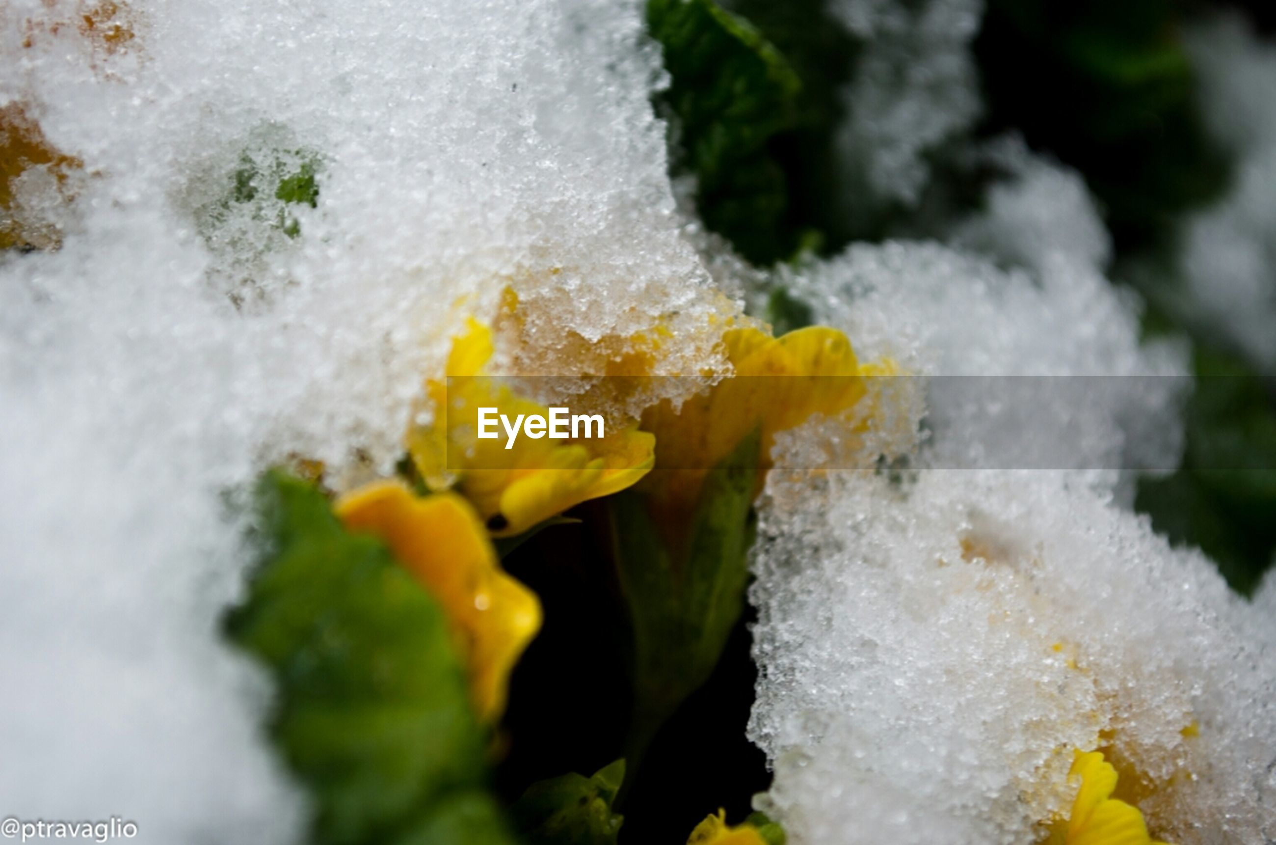 cold temperature, yellow, winter, close-up, frozen, snow, focus on foreground, ice, season, weather, freshness, water, white color, nature, selective focus, day, beauty in nature, outdoors, no people, high angle view