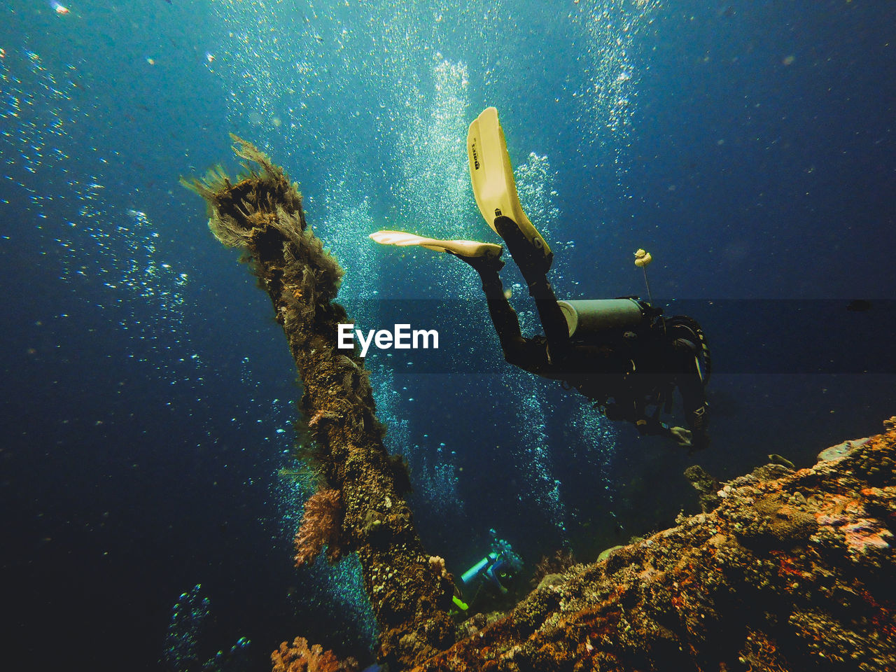 underwater, undersea, swimming, water, sea, exploration, scuba diving, aquatic sport, sport, adventure, one person, sea life, nature, real people, animal wildlife, animals in the wild, marine, underwater diving