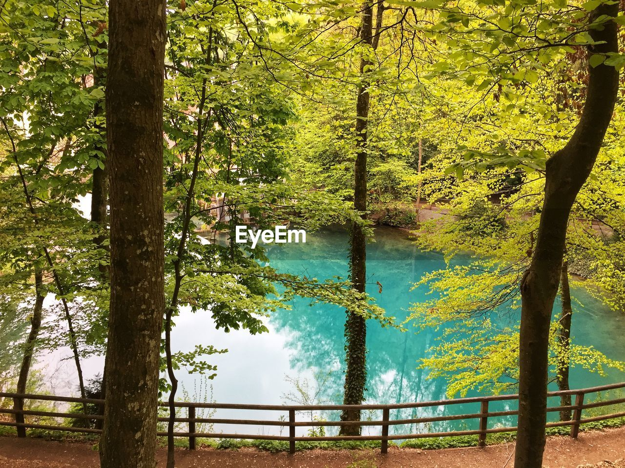 tree, plant, tree trunk, trunk, water, beauty in nature, tranquility, growth, tranquil scene, nature, forest, land, lake, day, no people, scenics - nature, non-urban scene, green color, outdoors