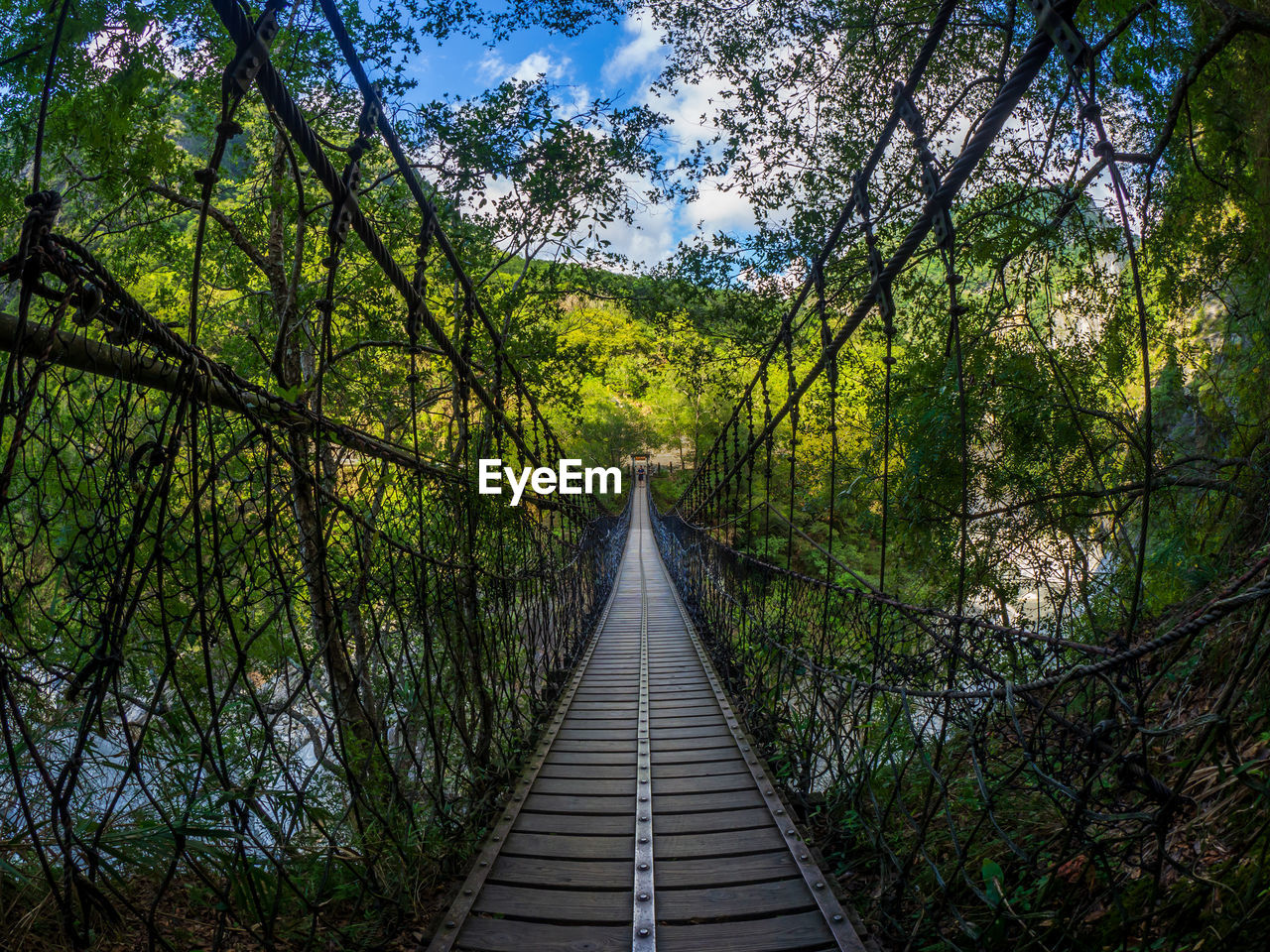 tree, plant, direction, the way forward, land, tranquility, nature, growth, forest, diminishing perspective, wood - material, beauty in nature, day, footbridge, connection, bridge, tranquil scene, scenics - nature, green color, no people, outdoors, wood, change