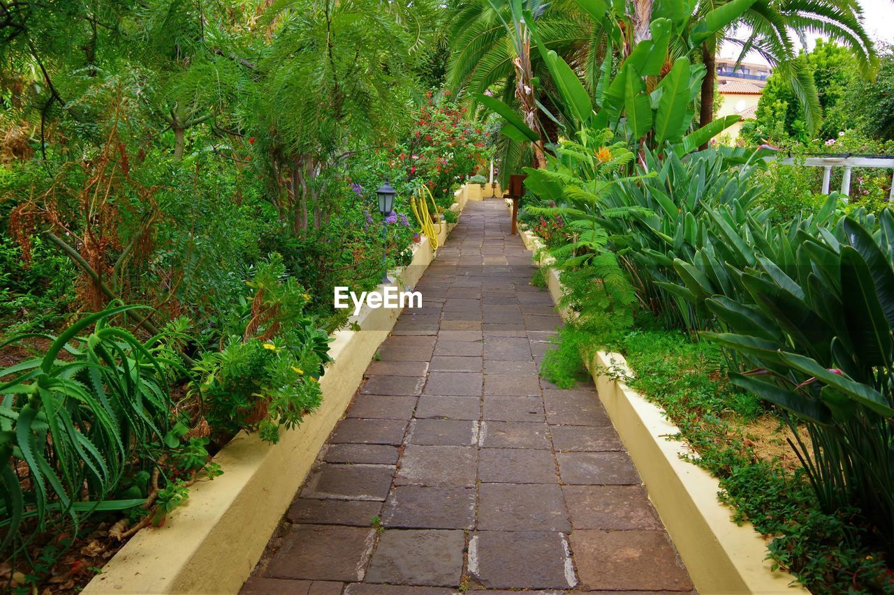 plant, direction, footpath, growth, the way forward, green color, nature, no people, day, tree, beauty in nature, outdoors, diminishing perspective, garden path, tranquility, park, front or back yard, garden, park - man made space, leaf, paving stone