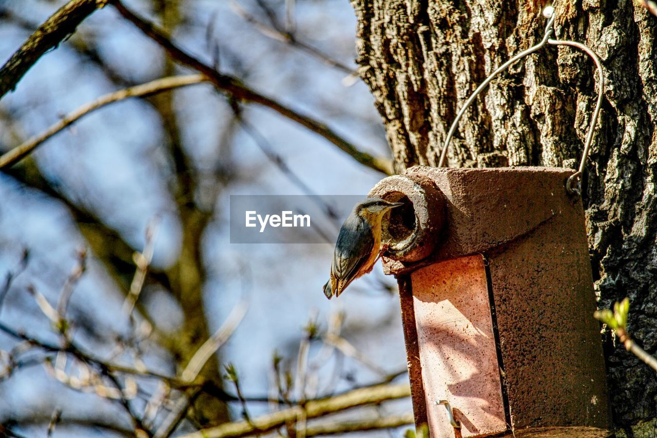 focus on foreground, tree, animal, one animal, animal themes, day, animal wildlife, no people, animals in the wild, vertebrate, nature, plant, close-up, trunk, outdoors, metal, tree trunk, bird, sunlight, branch