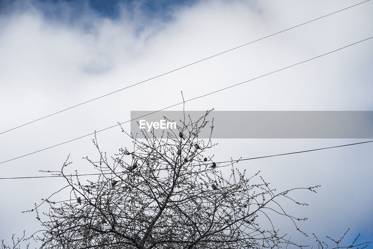 Low angle view of power cables against cloudy sky