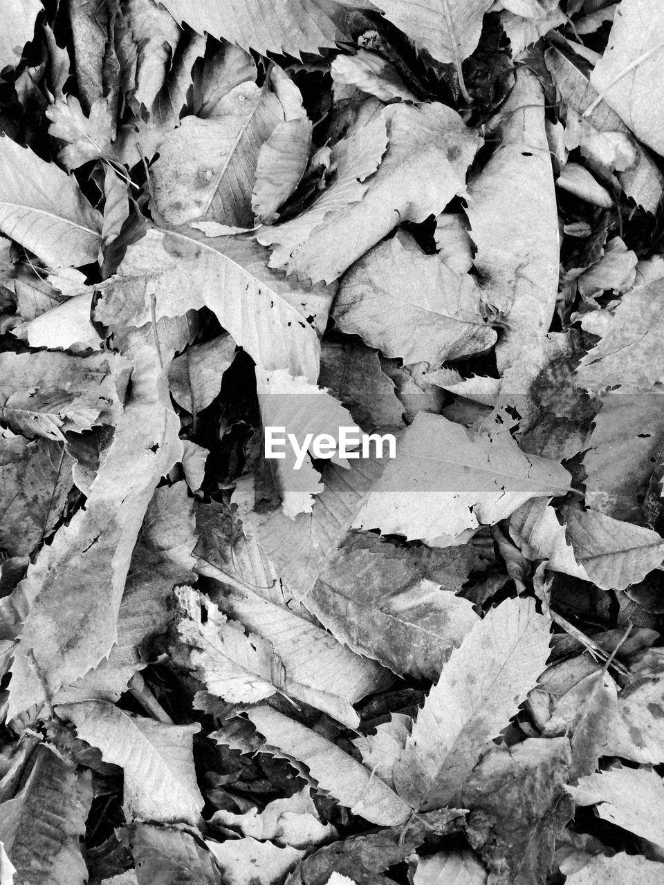 leaf, autumn, abundance, no people, backgrounds, day, full frame, nature, change, outdoors, fragility, close-up
