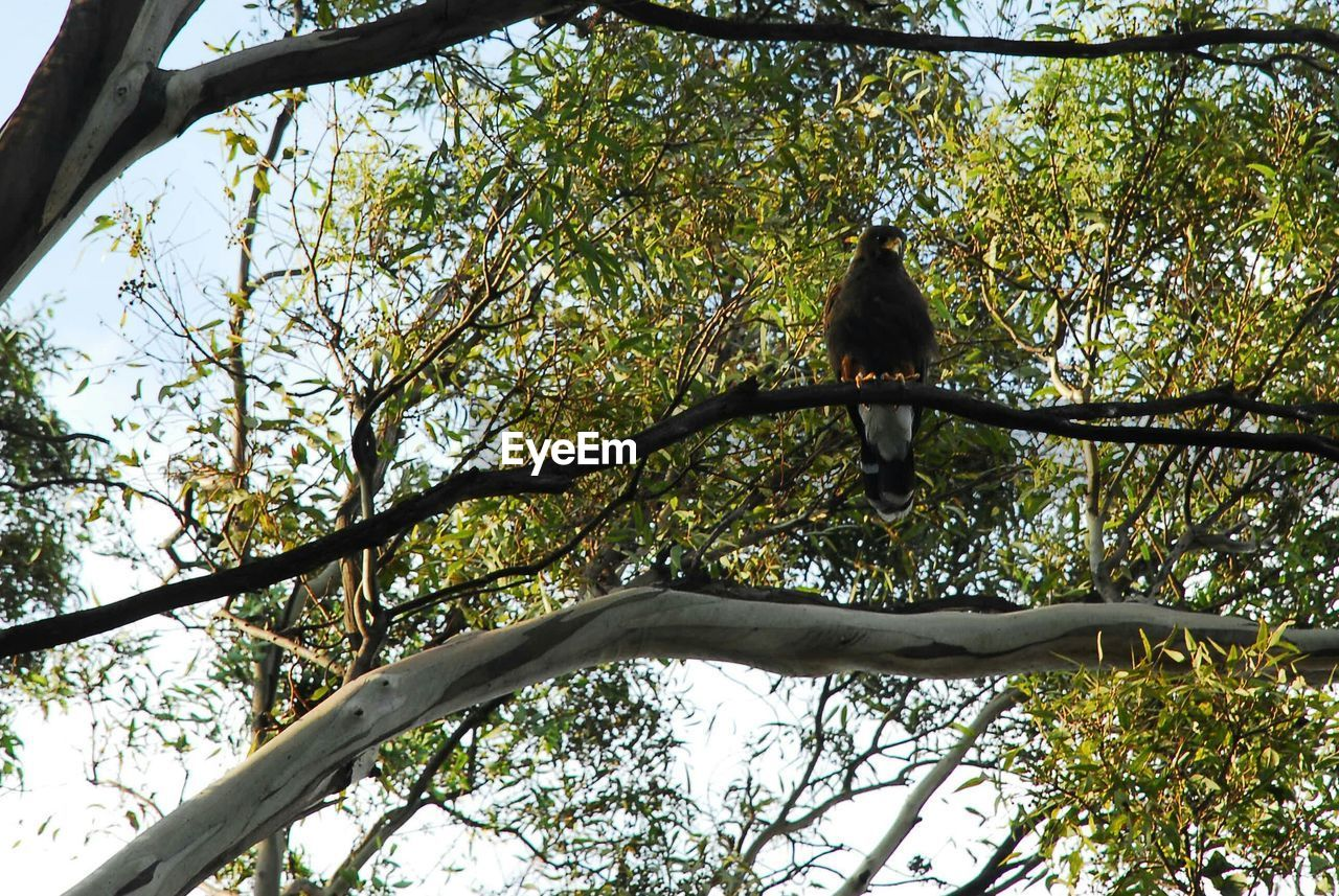 tree, animal themes, low angle view, one animal, branch, animals in the wild, day, nature, no people, outdoors, bird, perching, animal wildlife, beauty in nature, sky