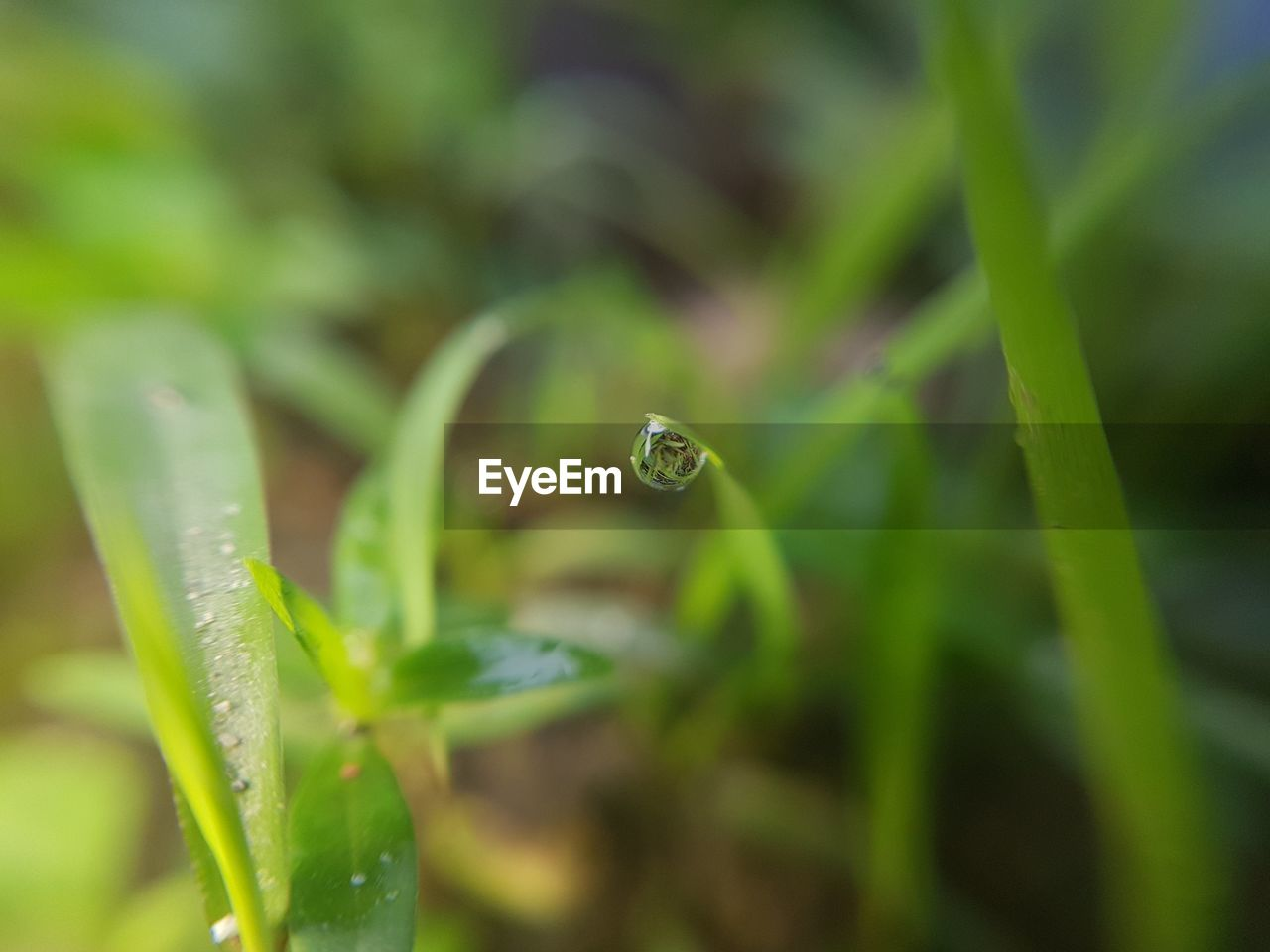 green color, plant, selective focus, growth, close-up, plant part, leaf, drop, nature, water, no people, beauty in nature, day, wet, freshness, vulnerability, outdoors, fragility, grass, dew, blade of grass, purity, raindrop