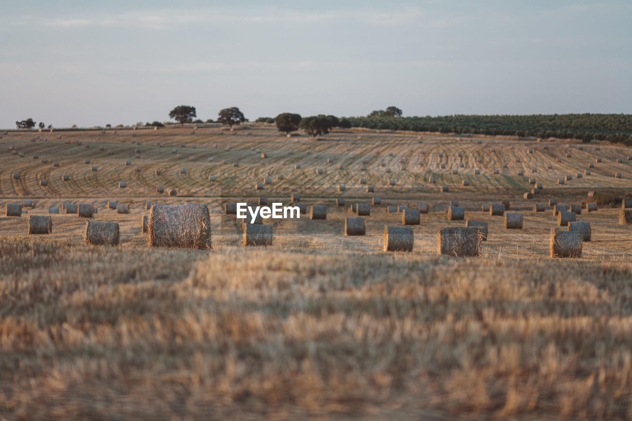 HAY BALES IN FARM AGAINST SKY