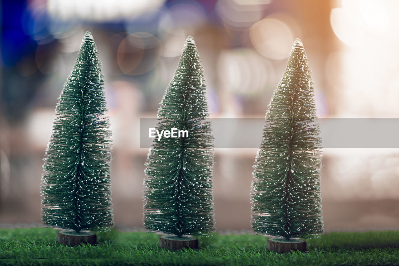 green color, plant, focus on foreground, no people, tree, nature, growth, close-up, selective focus, day, christmas tree, celebration, christmas decoration, christmas, field, outdoors, land, shape, beauty in nature, decoration, coniferous tree