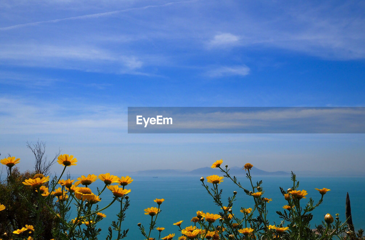 Yellow flowers growing in front of sea against blue sky