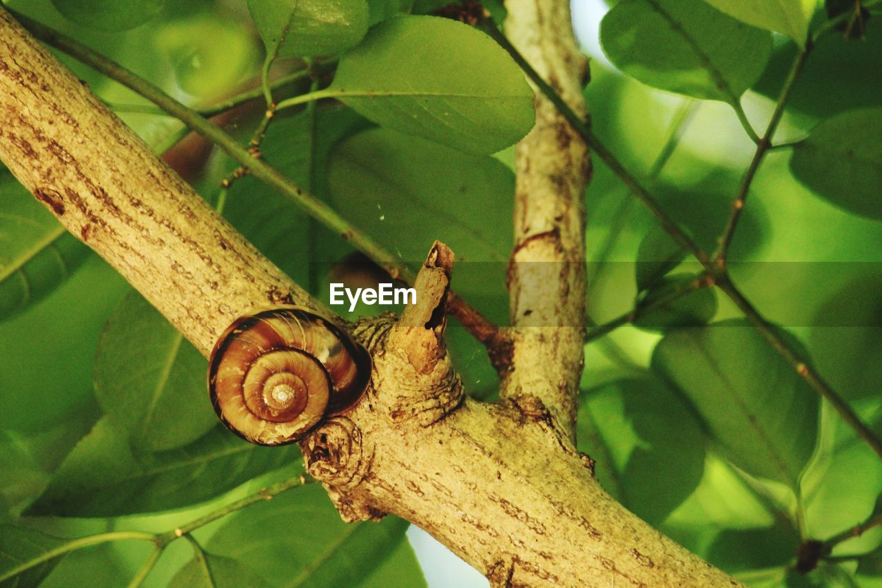 animal wildlife, animals in the wild, animal, animal themes, plant part, one animal, tree, close-up, plant, invertebrate, leaf, nature, mollusk, day, focus on foreground, gastropod, branch, no people, green color, snail, outdoors