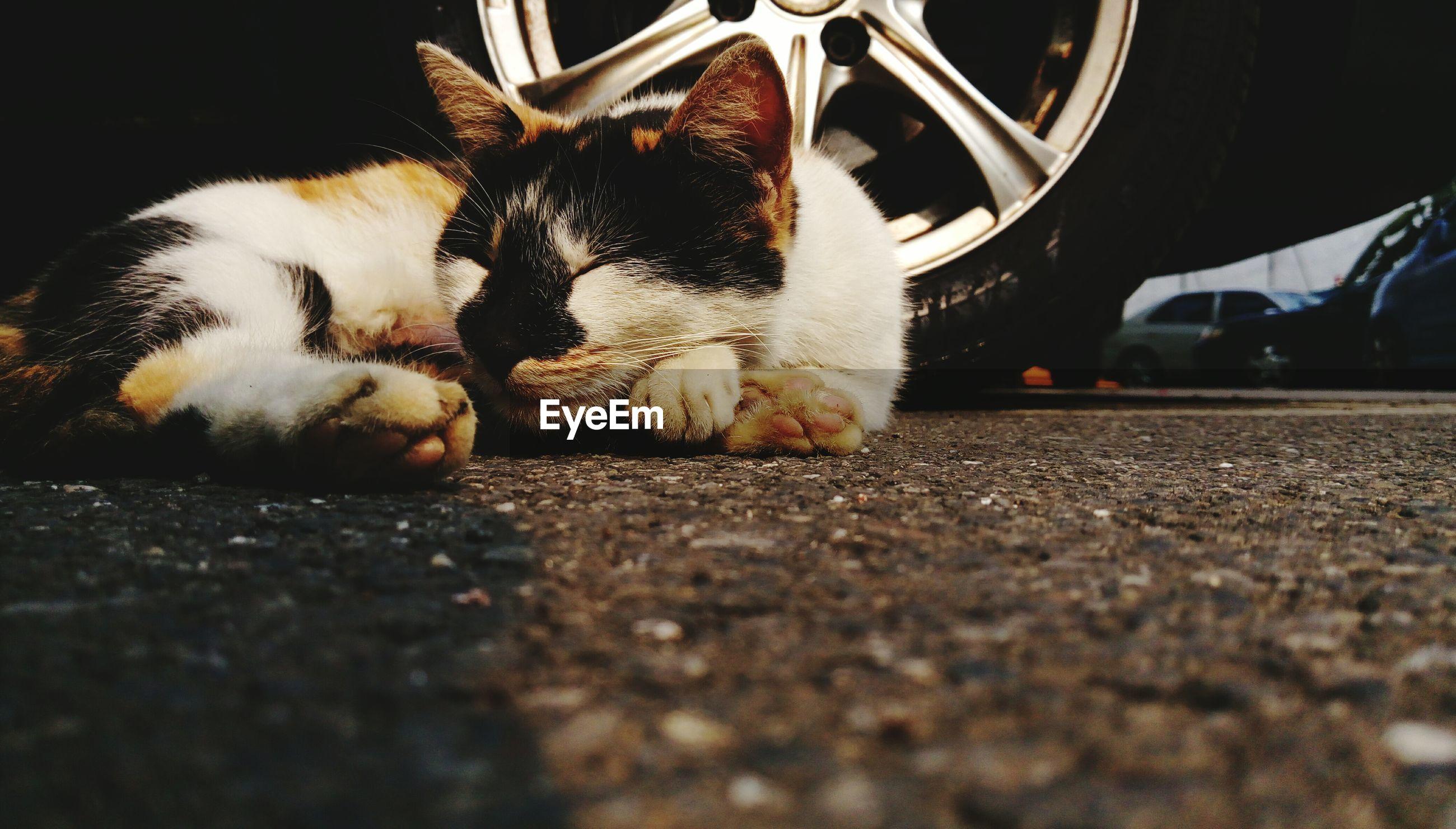 Cat sleeping in parking lot