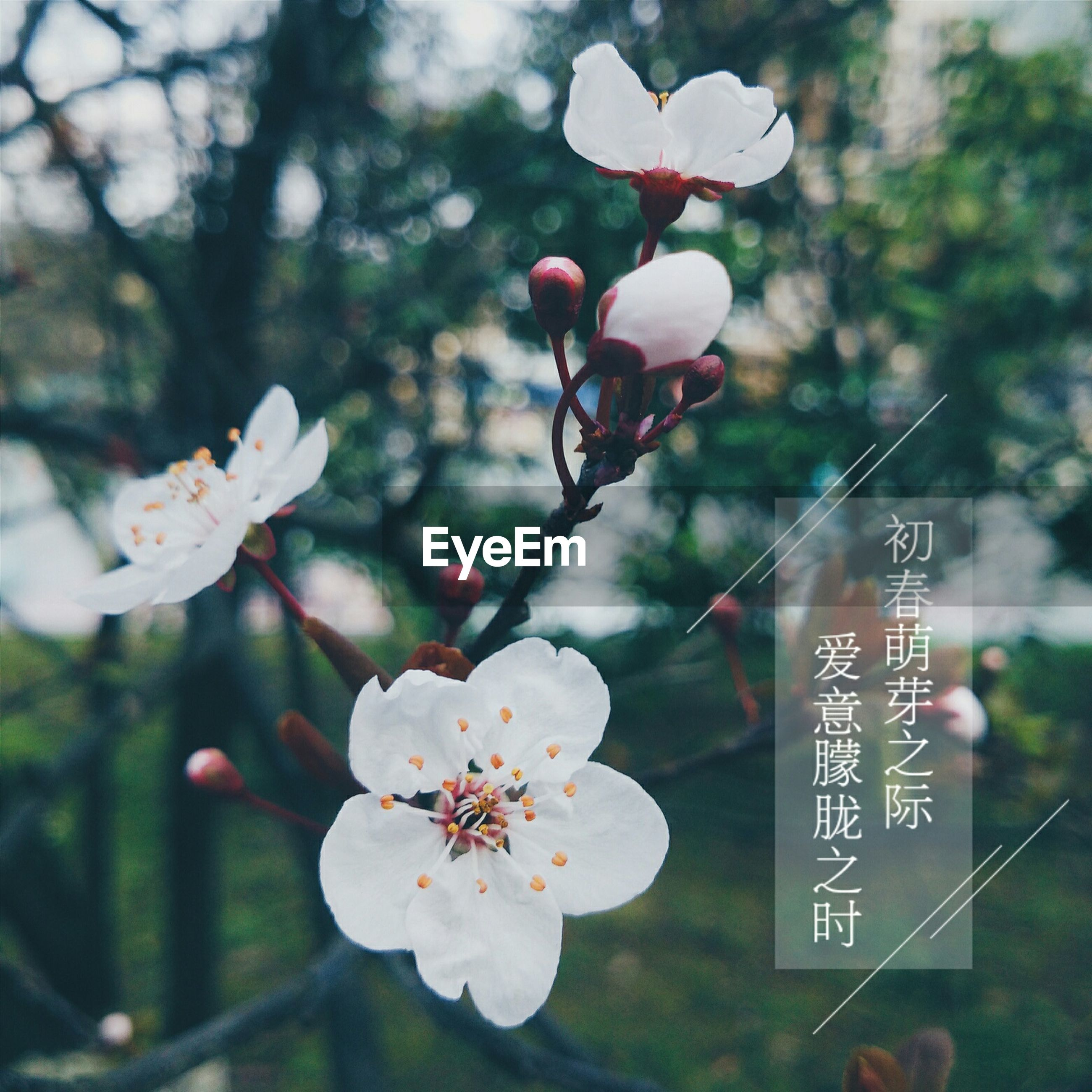 flower, freshness, growth, focus on foreground, tree, fragility, branch, beauty in nature, close-up, nature, petal, cherry blossom, blooming, blossom, white color, twig, day, fruit tree, in bloom, plant
