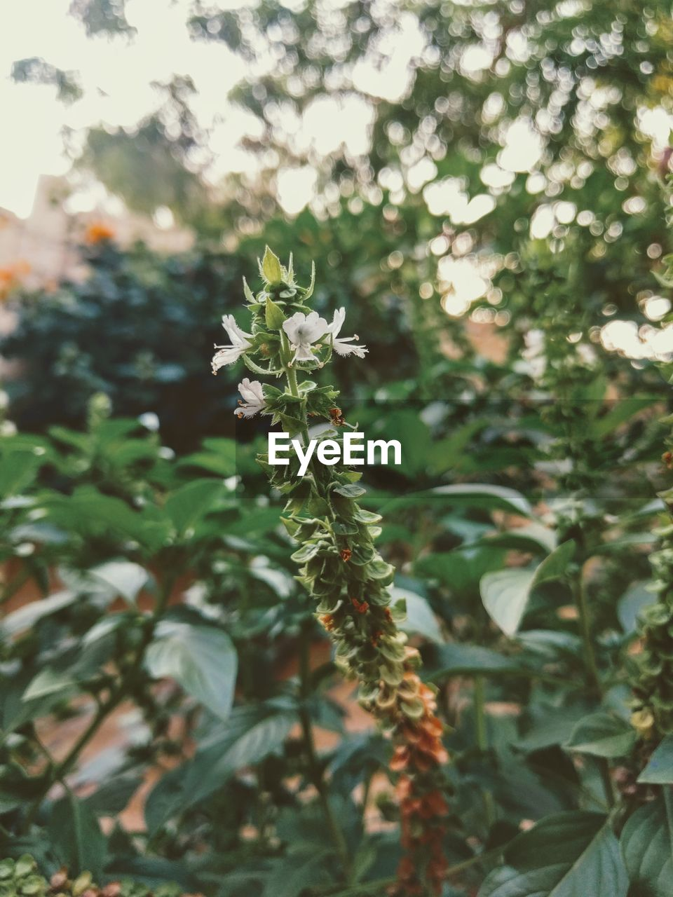 nature, growth, plant, no people, focus on foreground, day, green color, leaf, outdoors, beauty in nature, close-up, fragility, freshness, flower