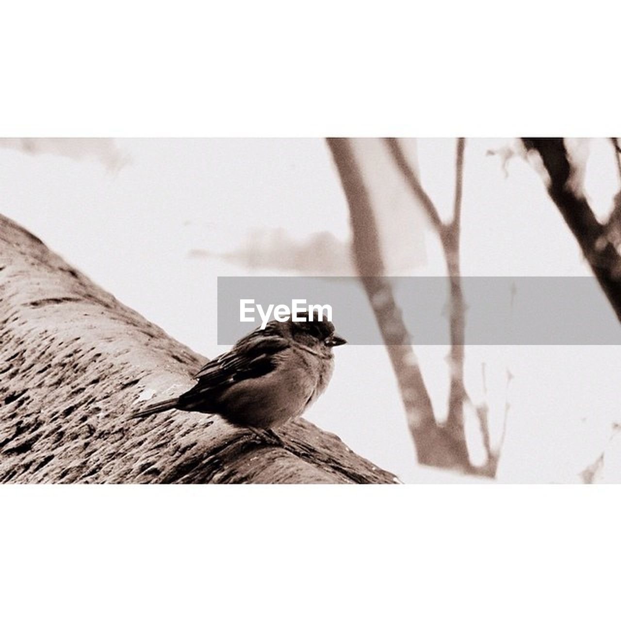 bird, animal themes, one animal, animals in the wild, outdoors, day, no people, perching, nature, full length, close-up, clear sky, sparrow