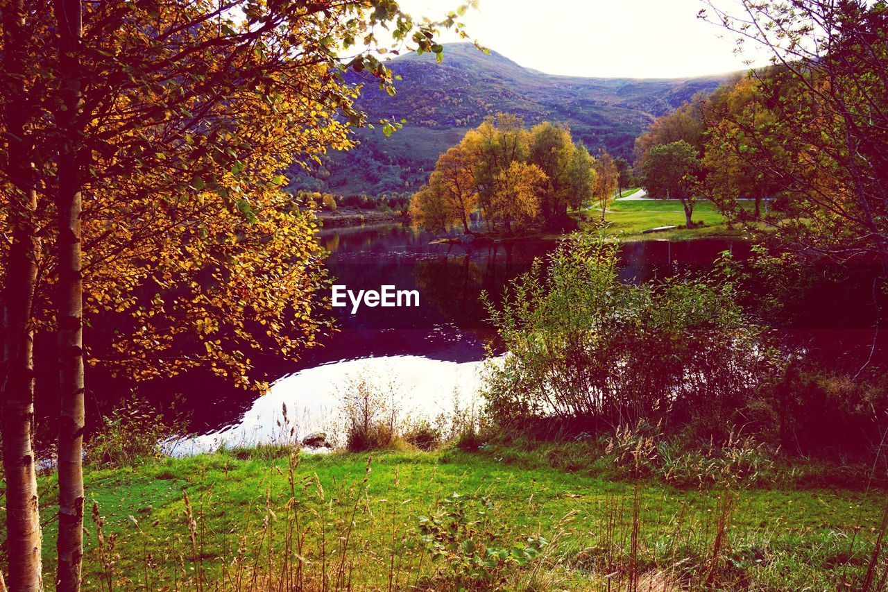 tree, nature, beauty in nature, grass, autumn, outdoors, tranquility, growth, no people, day, scenics, tranquil scene, mountain, lake, landscape, water