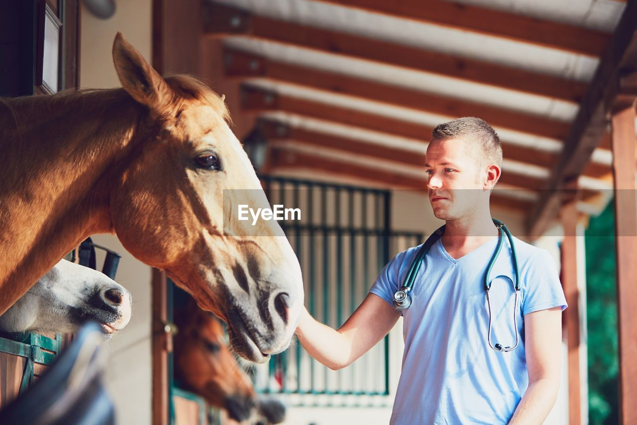Male Veterinarian Checking Horse At Stable