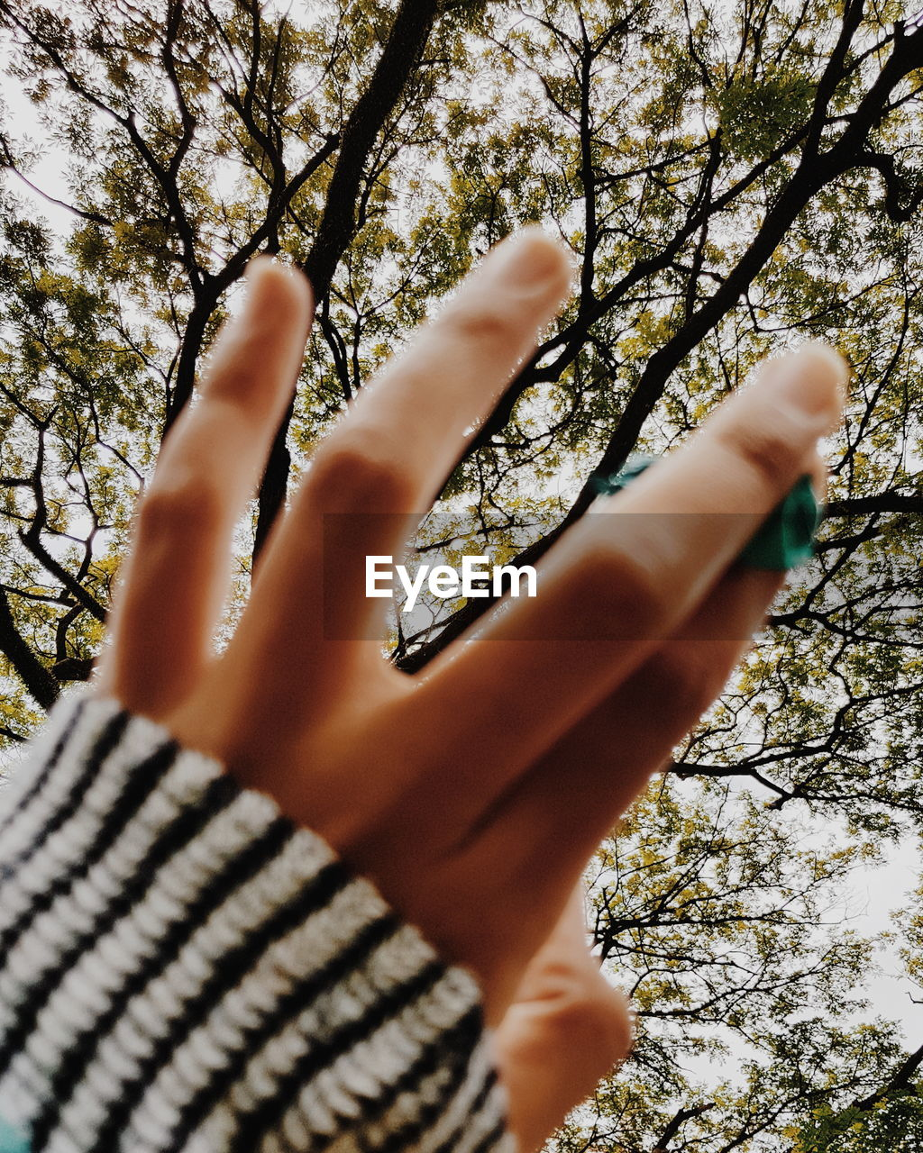 human hand, real people, human finger, one person, gesturing, tree, human body part, lifestyles, day, low angle view, leisure activity, outdoors, tree trunk, nature, women, beauty in nature, close-up, sky, people