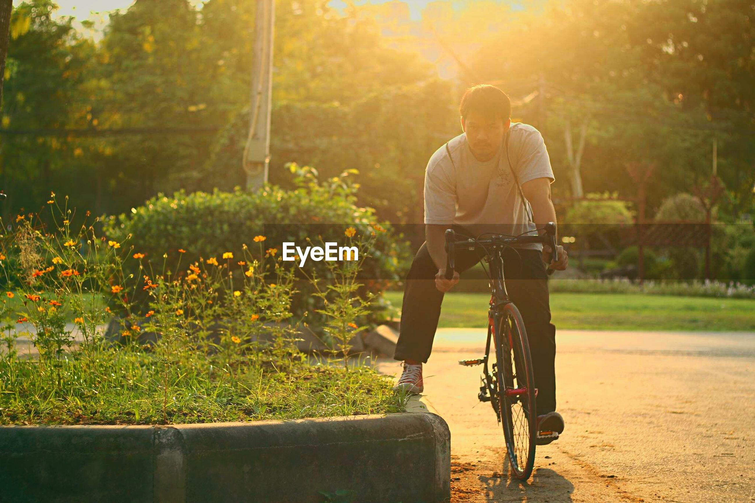 Portrait of young man riding bicycle against plants at park during sunset