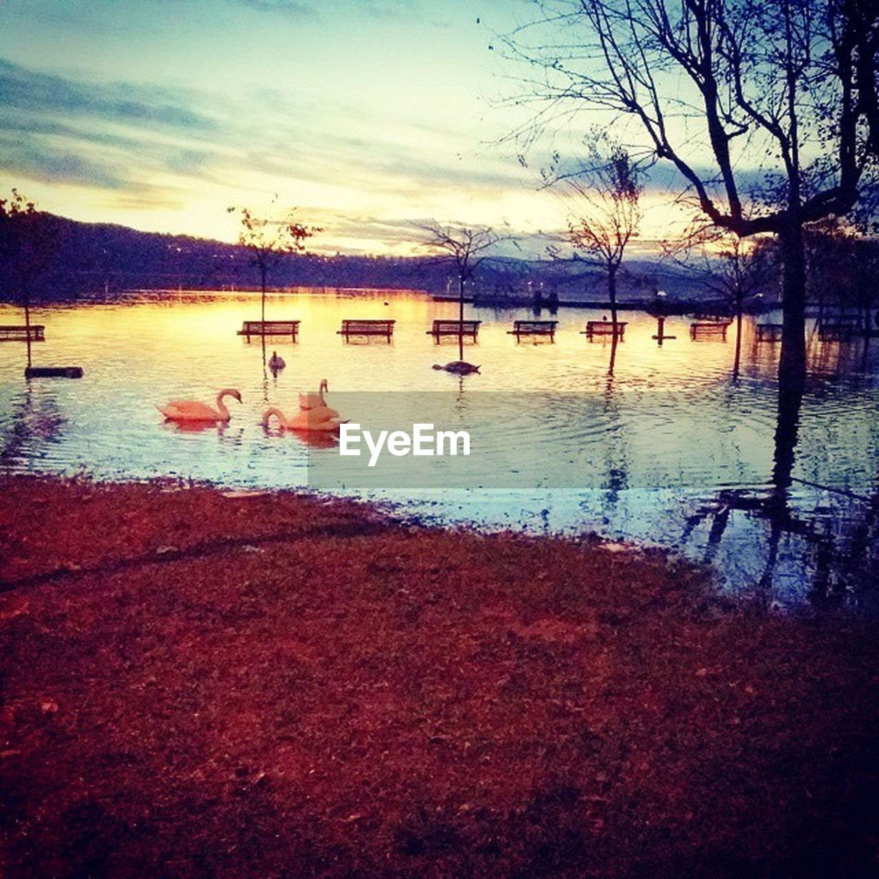 water, lake, reflection, sky, nature, no people, swimming pool, outdoors, tranquility, beauty in nature, swimming, scenics, floating on water, sunset, tree, swan, day, bird, animal themes