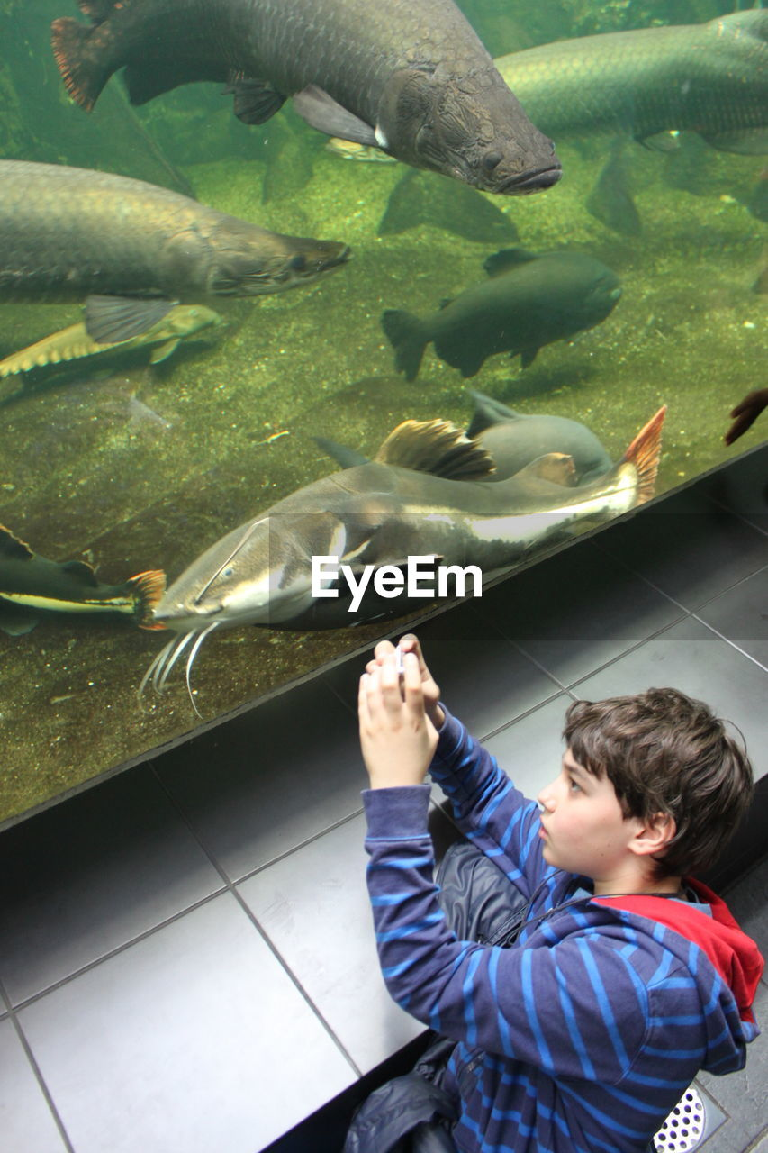 fish, real people, animal themes, childhood, one person, animals in captivity, boys, lifestyles, leisure activity, water, large group of animals, high angle view, aquarium, sea life, indoors, standing, day, nature, people
