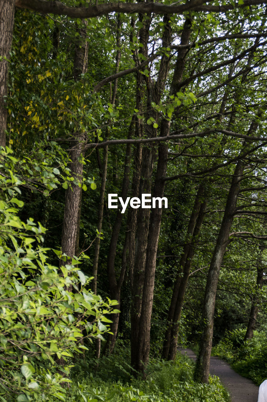 forest, nature, outdoors, tree, day, green color, no people, beauty in nature, scenics