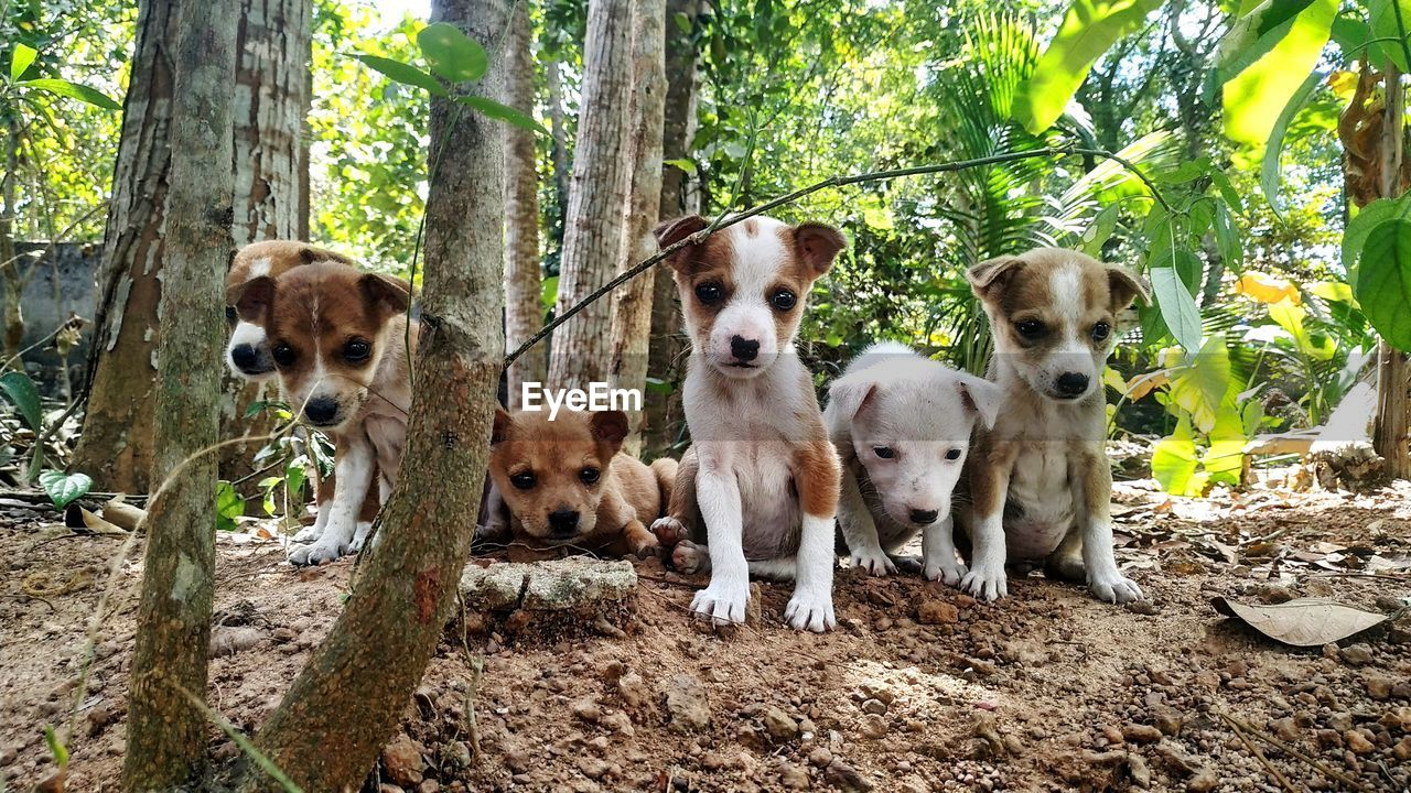 mammal, animal themes, group of animals, tree, animal, canine, domestic, pets, domestic animals, dog, vertebrate, plant, land, forest, tree trunk, portrait, trunk, nature, day, no people, outdoors, animal family