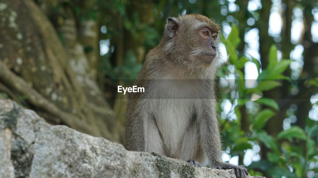 animal themes, animal, animal wildlife, one animal, animals in the wild, mammal, primate, tree, focus on foreground, vertebrate, monkey, plant, looking, day, no people, low angle view, looking away, nature, outdoors, forest