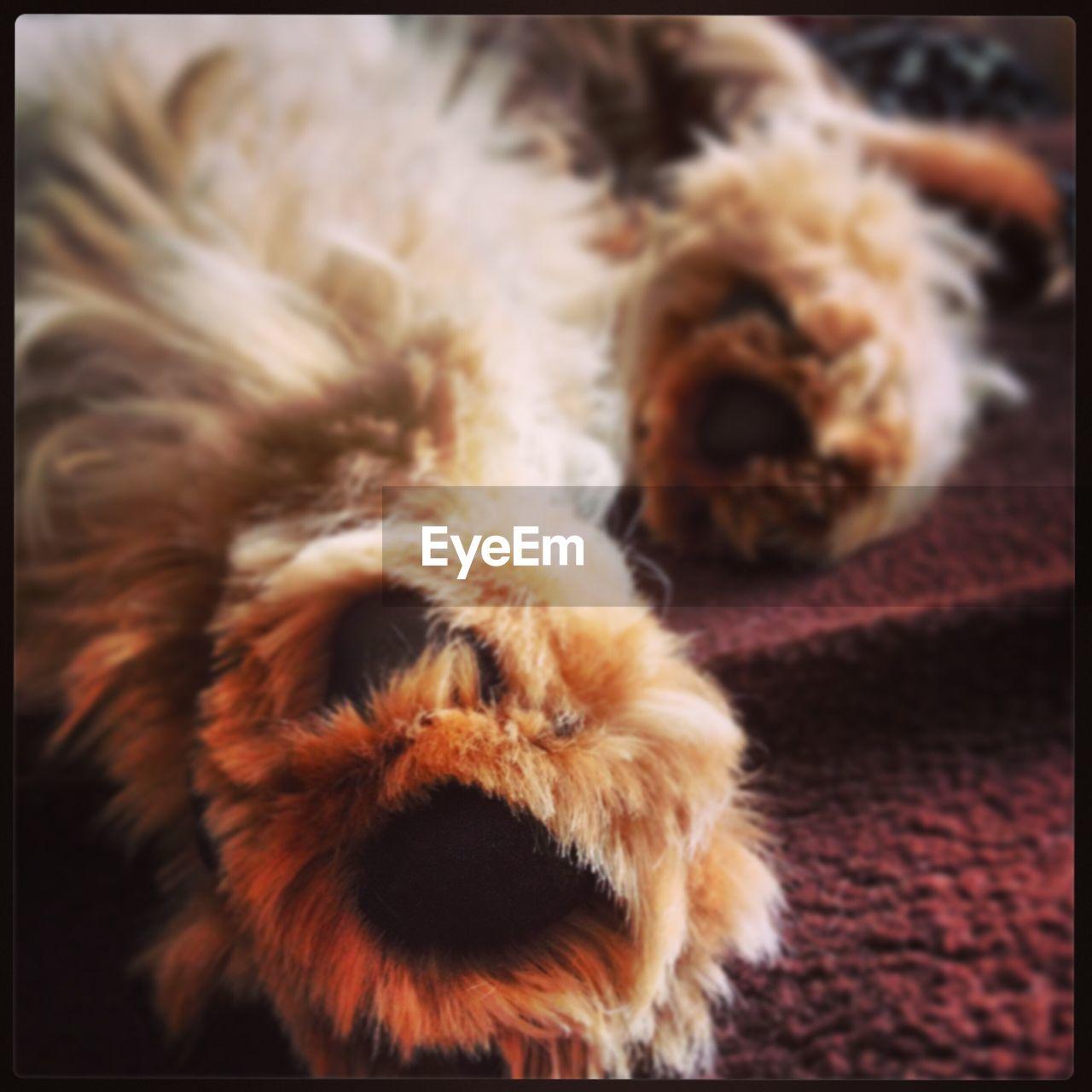 pets, one animal, domestic animals, animal themes, dog, mammal, indoors, no people, animal hair, close-up, day