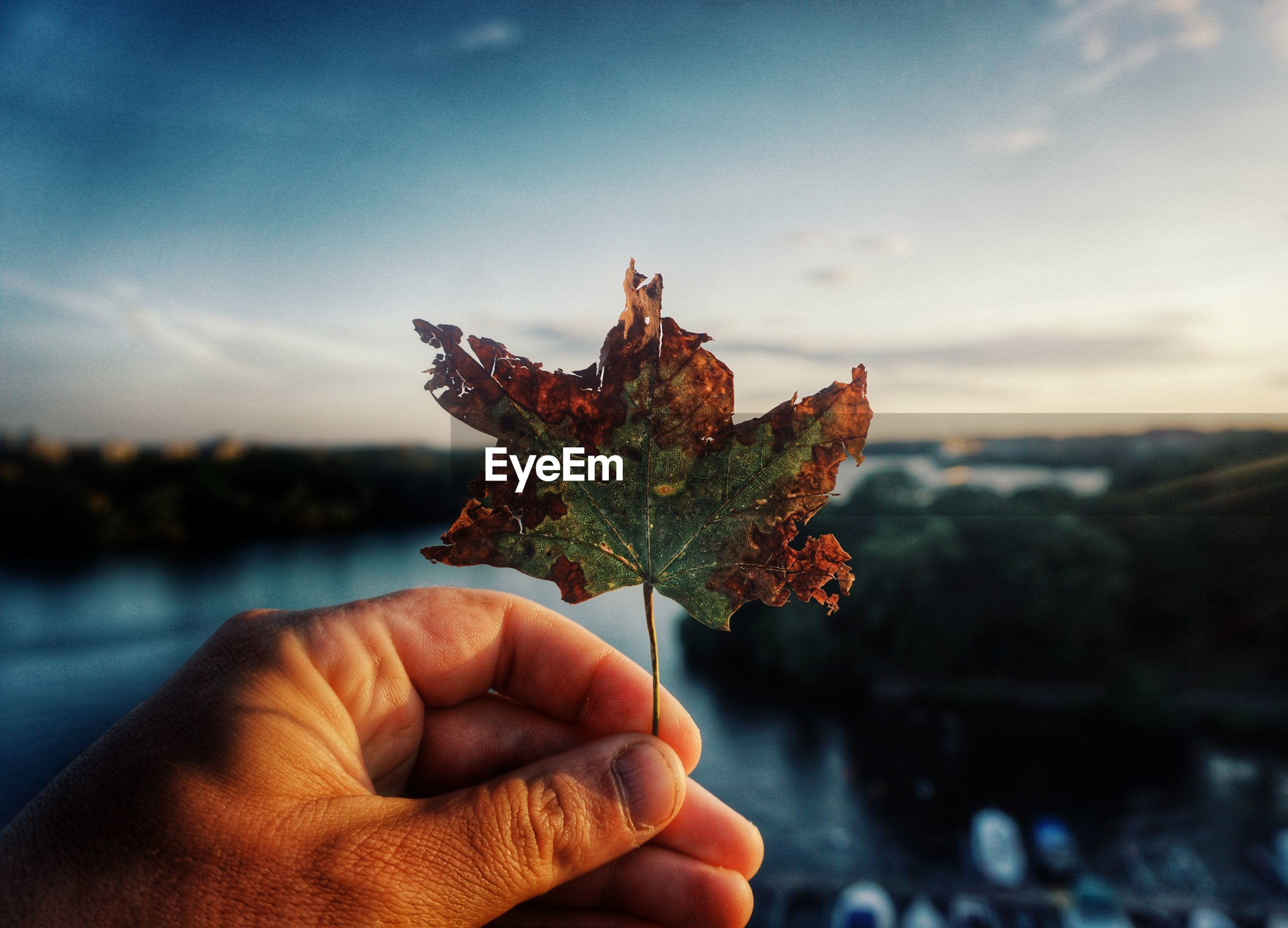 Cropped hand of person holding autumn leaf against sky