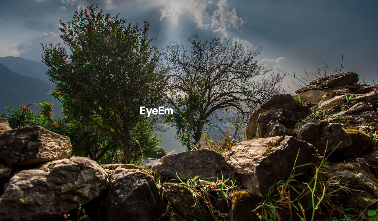 LOW ANGLE VIEW OF ROCKS AGAINST TREES AND SKY