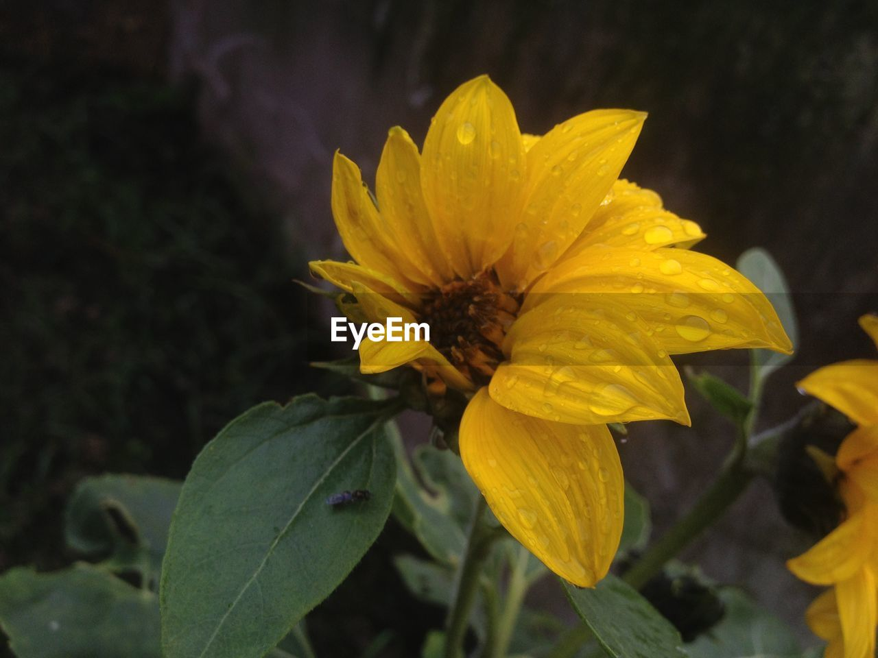 flower, petal, fragility, flower head, yellow, beauty in nature, growth, freshness, nature, blooming, plant, focus on foreground, outdoors, no people, close-up, day, leaf