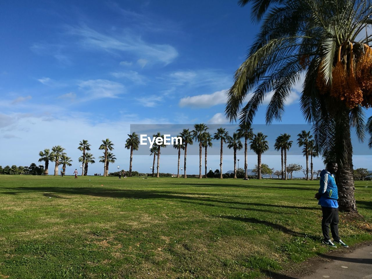 plant, sky, tree, grass, real people, one person, green color, field, leisure activity, nature, land, full length, palm tree, growth, tropical climate, rear view, beauty in nature, cloud - sky, lifestyles, outdoors