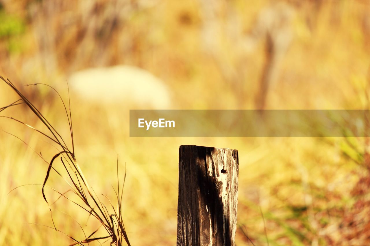 focus on foreground, no people, field, nature, close-up, outdoors, day, beauty in nature