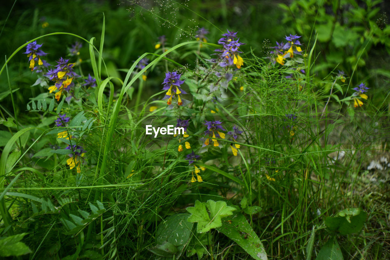 flower, growth, nature, purple, plant, fragility, green color, beauty in nature, blooming, outdoors, no people, freshness, day