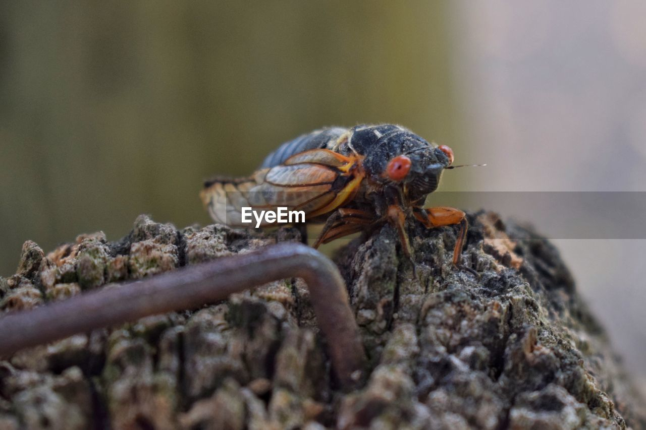 animal, animals in the wild, animal themes, animal wildlife, selective focus, close-up, one animal, invertebrate, rock, no people, day, solid, nature, rock - object, insect, outdoors, focus on foreground, zoology, wood - material, plant, marine