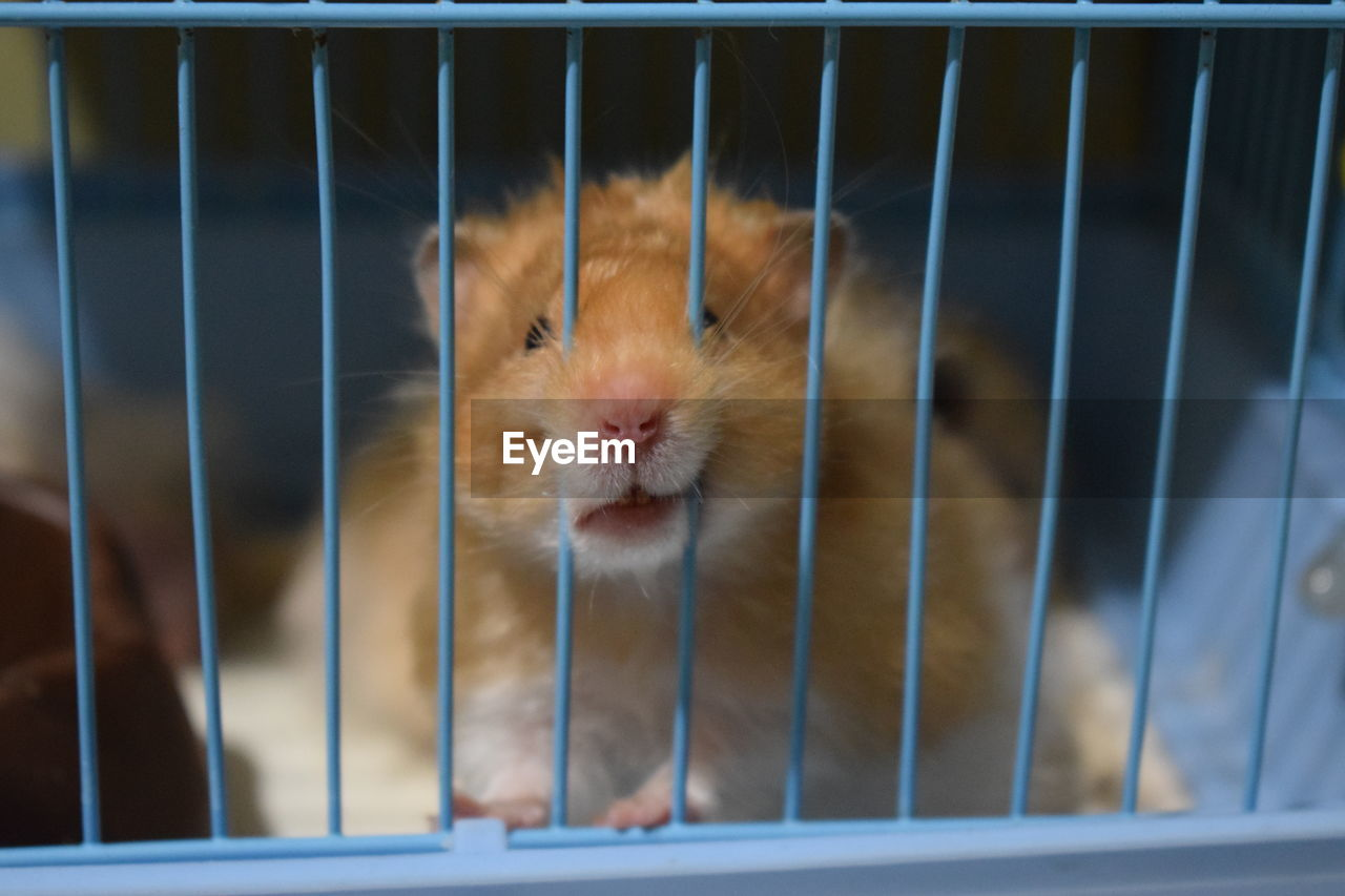 Close-up of hamster in cage