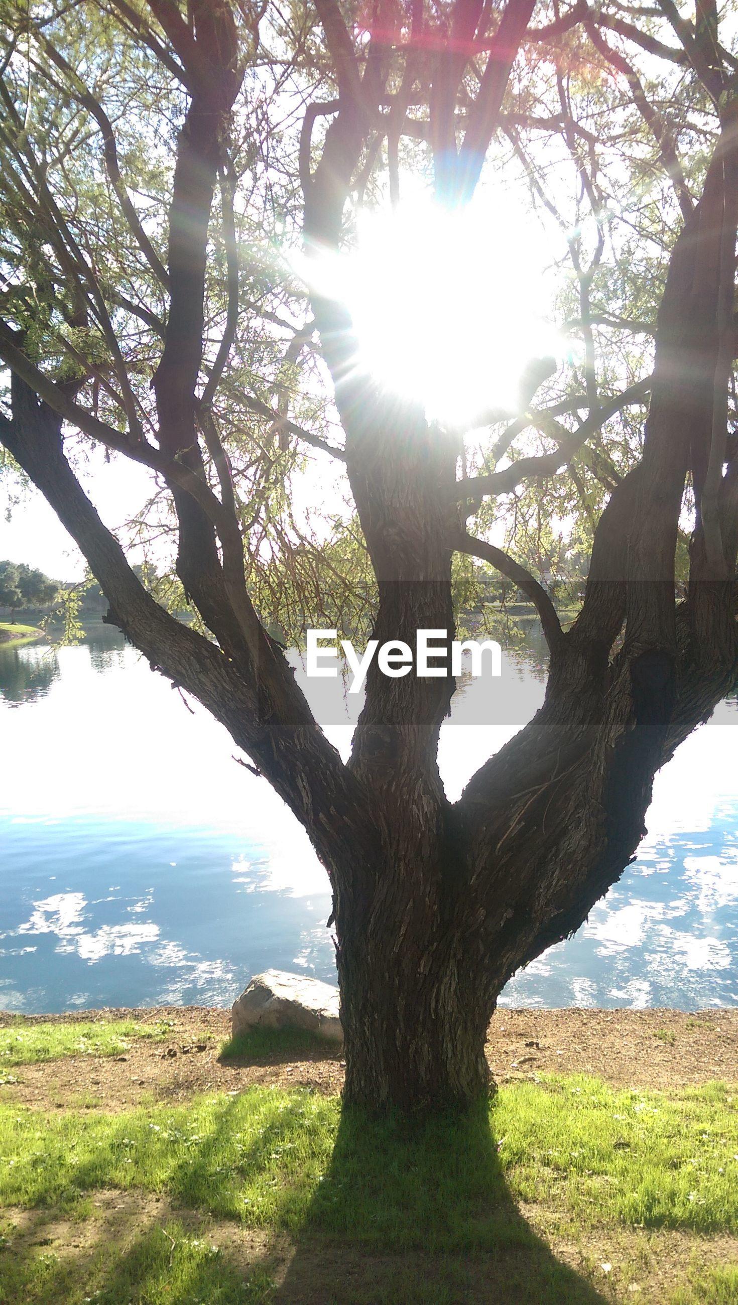 Sun shining through tree at riverbank