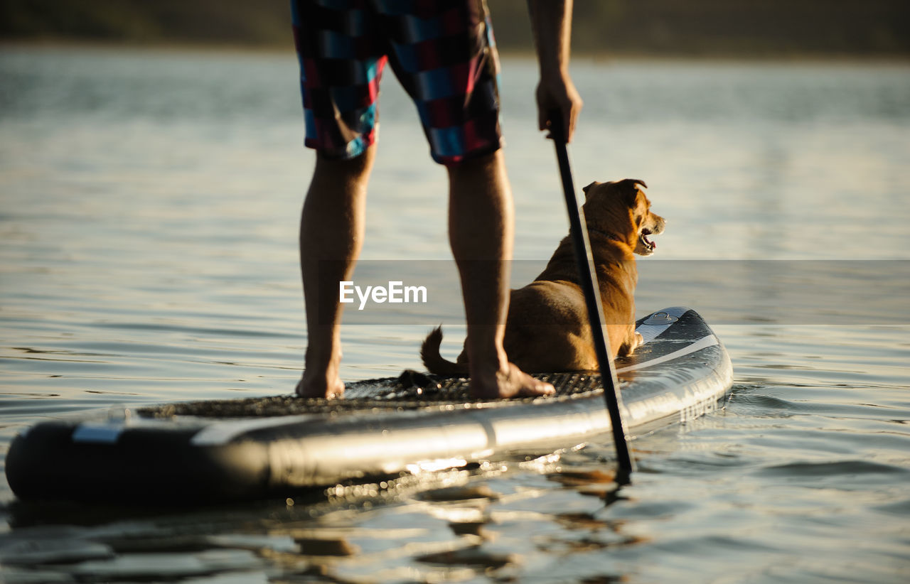 Low Section Of Man Paddleboarding With Dog On Lake During Sunset