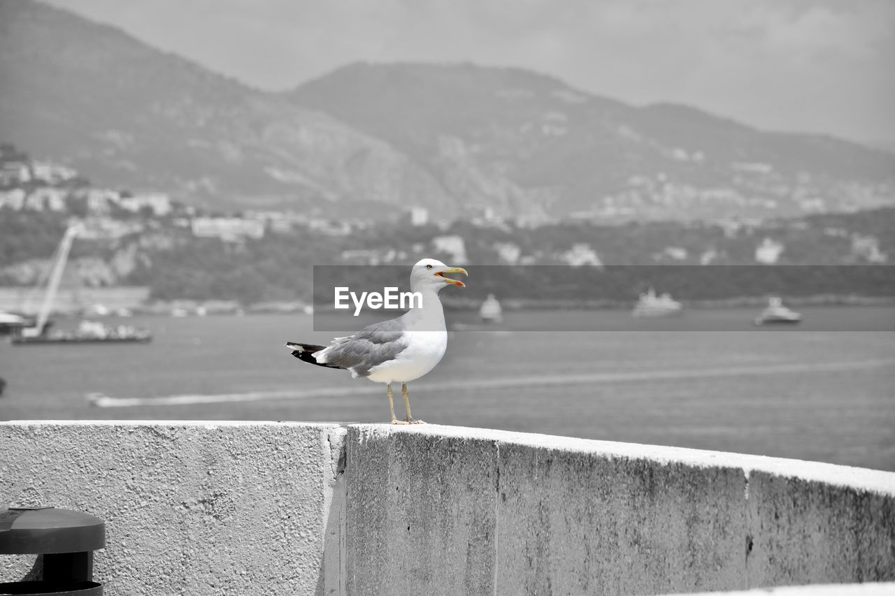 SEAGULL PERCHING ON RETAINING WALL AGAINST SEA
