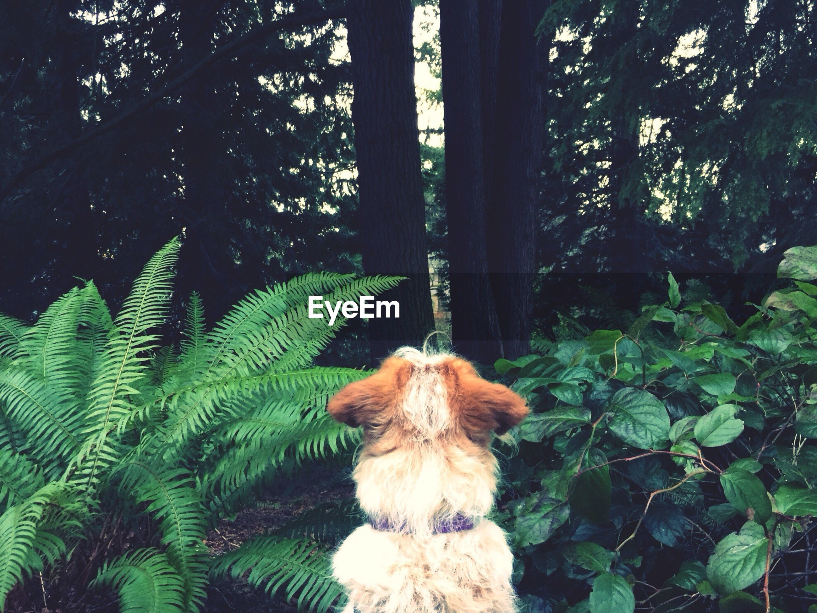 Rear view of dog by plants