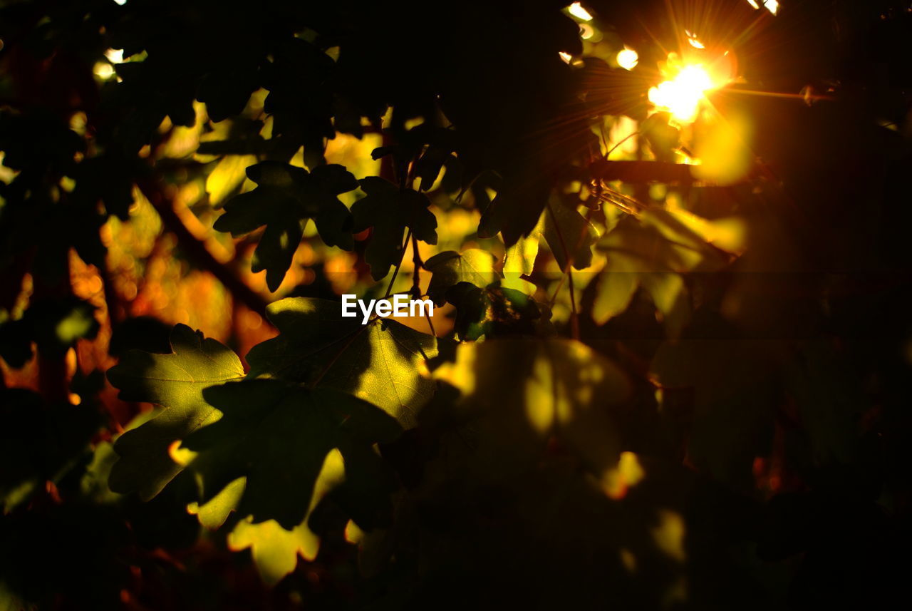 growth, nature, leaf, outdoors, no people, plant, beauty in nature, night, close-up, tree, flower, freshness, fragility, flower head